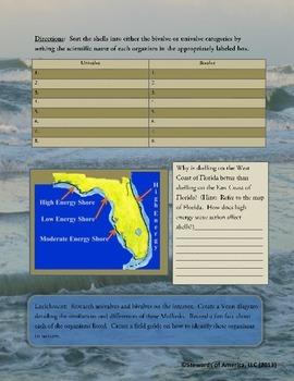 Mollusks:  Sorting Bivalves and Univavles - Florida Coastal Ecosystems
