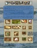 Mollusks:  Sorting Bivalves and Univavles - Florida Coasta