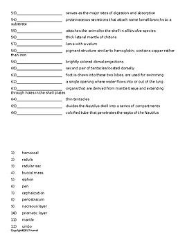 Mollusks Vocabulary Quiz or Worksheet for Invertebrate Biology