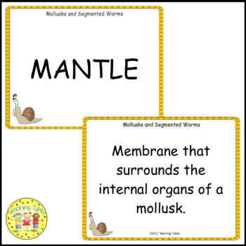 Mollusks and Segmented Worms Vocabulary Cards