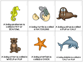 Image of: Worksheets Mommy Baby Names Ocean Animals Teachers Pay Teachers Mommy Baby Names Ocean Animals By Whitneyslp Tpt