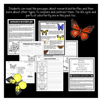 Spring Activities: Butterflies | Butterfly Life Cycle | All About Butterflies