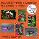 Monarch Butterflies and Caterpillars Mini Bundle