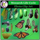 Monarch Butterfly Clip Art ♦ Butterfly Life Cycle Clipart