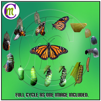 Monarch Butterfly Clip Art Butterfly Life Cycle Clipart