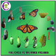 Monarch Butterfly Clip Art ♦ Butterfly Life Cycle Photo Clipart