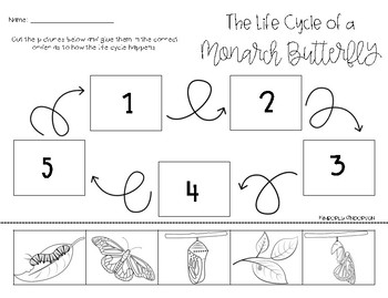 monarch butterfly life cycle cut paste by beached bum teacher tpt. Black Bedroom Furniture Sets. Home Design Ideas