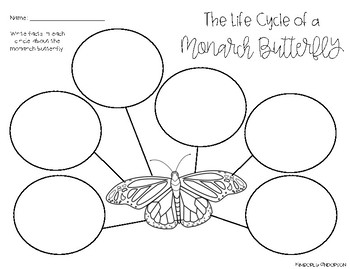 Monarch Butterfly Life Cycle: Graphic Organizer