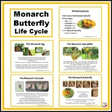 Monarch Butterfly ... Life Cycle ... Photographs ... SCIENCE FREEBIE