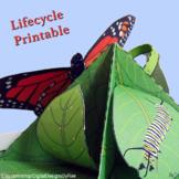 Monarch Butterfly Life Cycle Mini Quadrama