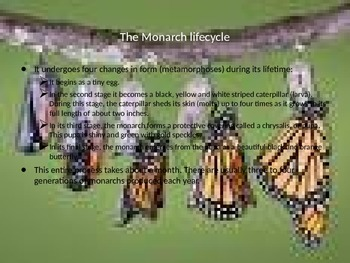 Monarch Butterfly Lifecycle