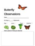 Monarch Butterfly Observation