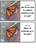 Monarch Butterfly Pack! Activities and Question Cards