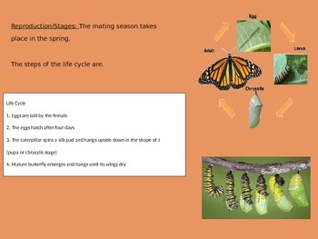 Monarch Butterfly Power Point - Facts Life Cycle Pictures