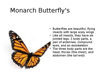 Monarch Butterfly Powerpoint