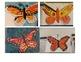 Monarch Butterfly Symmetry Project