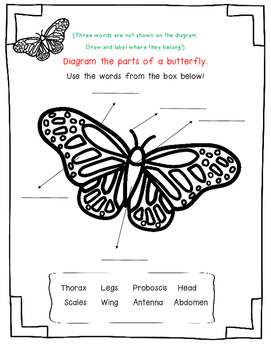 Monarch Butterfly by Gail Gibbons-A Nonfiction Book Response Journal