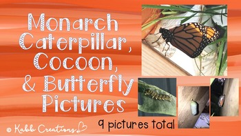 Monarch Caterpillar, Cocoon, and Butterfly Pictures