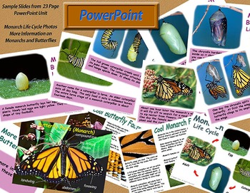 Monarch Life Cycle - Becoming a Monarch