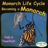 Monarch Life Cycle PowerPoint