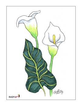 Monart Drawing Project: Calla Lily