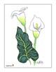 Monart Drawing Project: Calla Lily