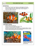 Clown Fish Drawing Project
