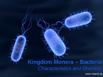 Moneran (Bacteria) Characteristics and Diversity PPT