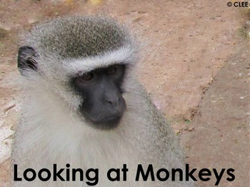 African Primates: Monkey - PDF presentation