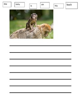 Monkey Paper Writing Wall