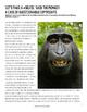 Monkey #Selfie Close Reading Activity CCSS Aligned