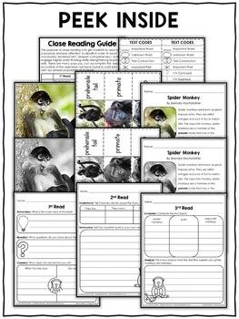 Close Reading Passage - Spider Monkey Activities