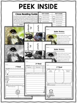 Spider Monkey Close Reading Passage Activities