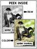 Close Reading Spider Monkey Activities