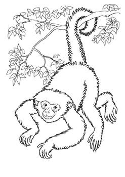 Monkeys Word Search