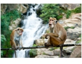 Monkeys and Bananas Spatial Concepts File Folder Activity