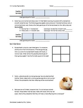 Genetics: Sex Linked Trait Punnett Squares | Worksheets, Students ...