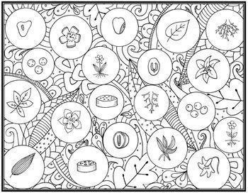 Monocot & Dicot Seek & Sort Doodle Page and Card Sort