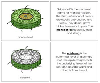 Monocot Root Nomenclature Book