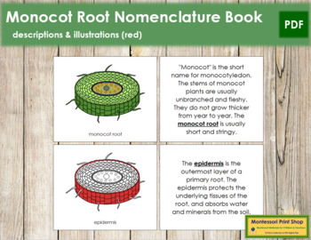 Monocot Root Nomenclature Book (Red)