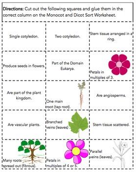 Monocot vs. Dicot Plant Sort
