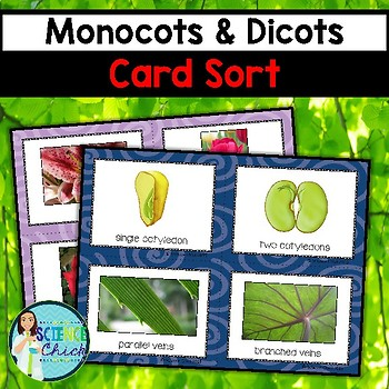 Monocot Teaching Resources Teachers Pay Teachers