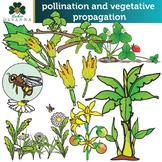 Monoecious - Dioecious - Pollination & Vegetative Propagat
