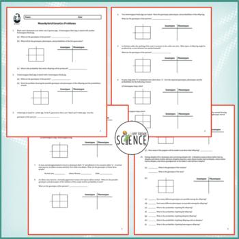 Monohybrid Cross Worksheet by Amy Brown Science  Teachers Pay