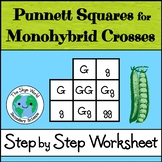 Punnett Squares for Monohybrid Crosses - Step by Step Worksheet