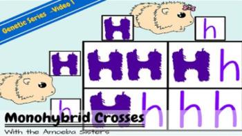 Monohybrid Crosses Recap Answer Key by The Amoeba Sisters ...