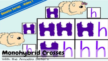Monohybrid Crosses Recap Answer Key By The Amoeba Sisters By Amoeba