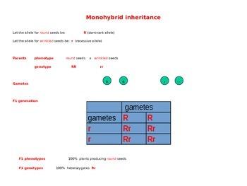 Monohybrid Inheritance Explained (Genetics Review) - Presentation/Handout