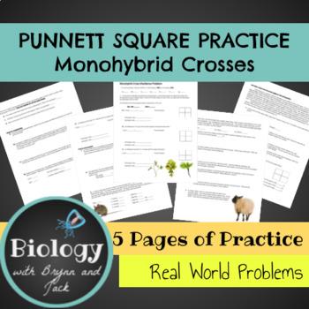 Monohybrid Punnet Square Practice