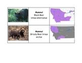 Montana Mammal Classification Cards